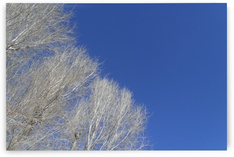 Winter Trees And Blue Sky 3 by Sherrie Larch