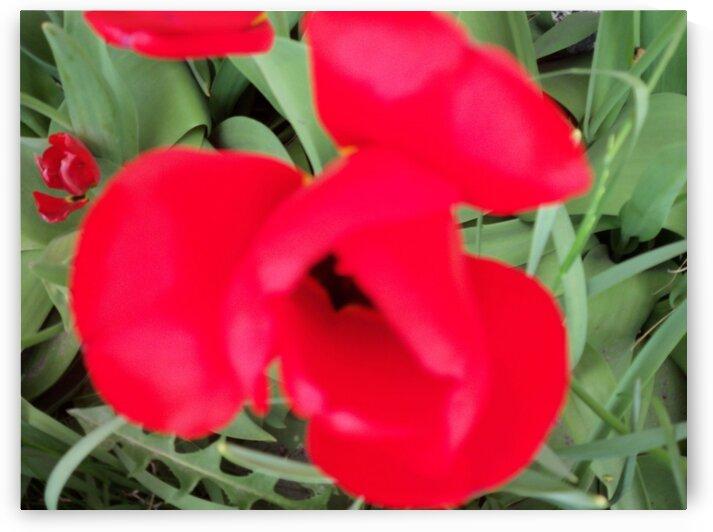 A Poppy 1 by Sherrie Larch
