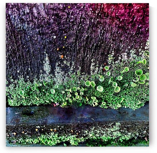 Lichen on Fence by BotanicalArt ca