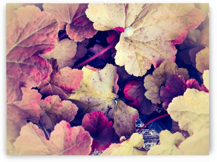 Shapely Pinkish Leaves by BotanicalArt ca