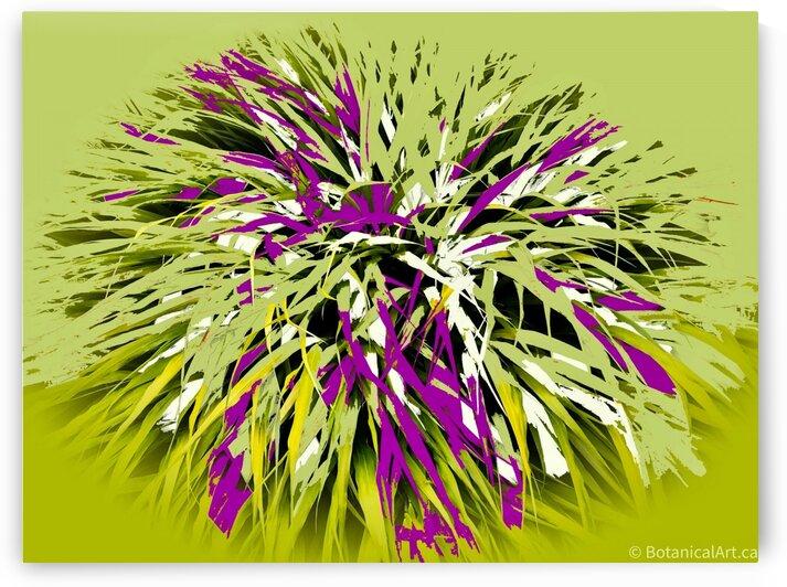 Grassy  by BotanicalArt ca