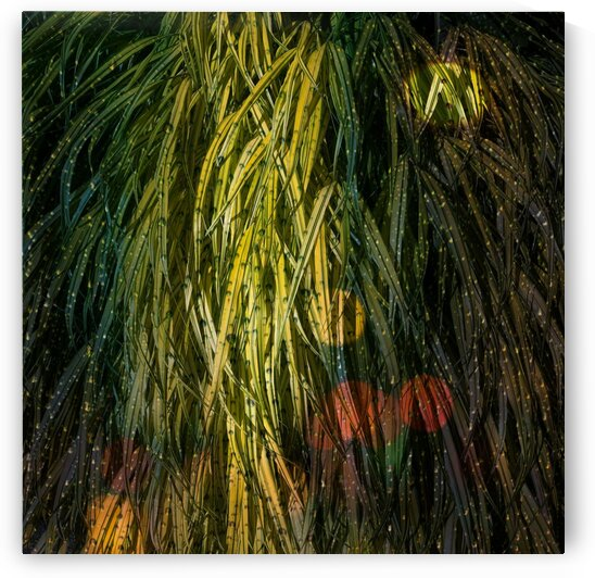 Flowing Grasses with Rain by BotanicalArt ca