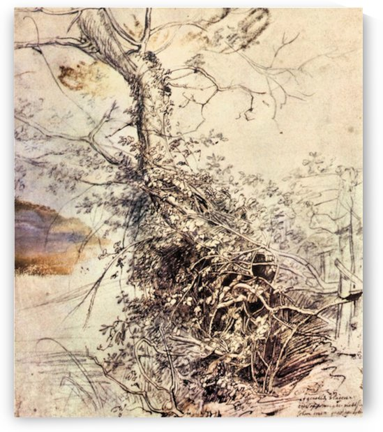 Study of Tree by Rubens by Rubens
