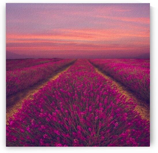 Lavender field in pink shade. by Ievgeniia Bidiuk
