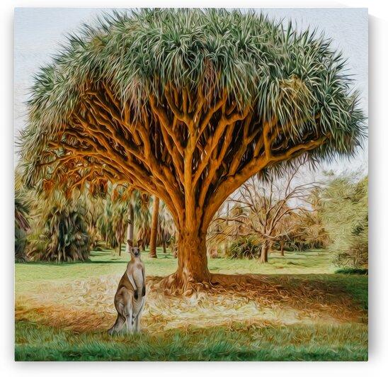 Kangaroo under the dragon tree. Dracaena cinnabari. by Ievgeniia Bidiuk