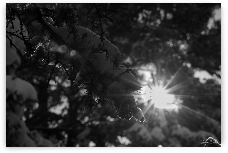 Sun through the trees by Dawn Evans