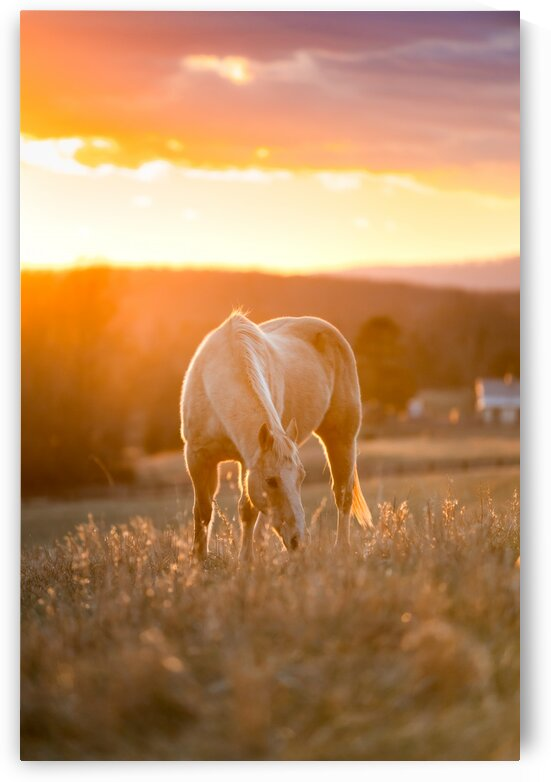 White Horse at Sunset by Lucas Moore