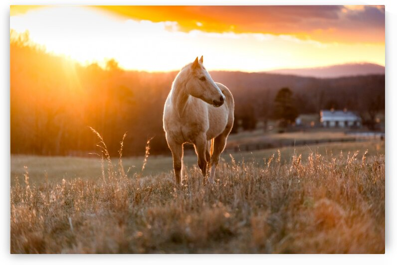 Golden Horse by Lucas Moore