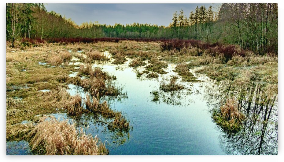 Little Campbell River Swamp by Michael Snell