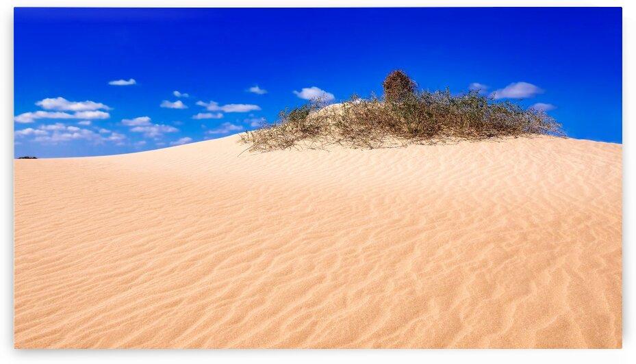 Vegetation on Sandhills - Mungo NP by Lexa Harpell