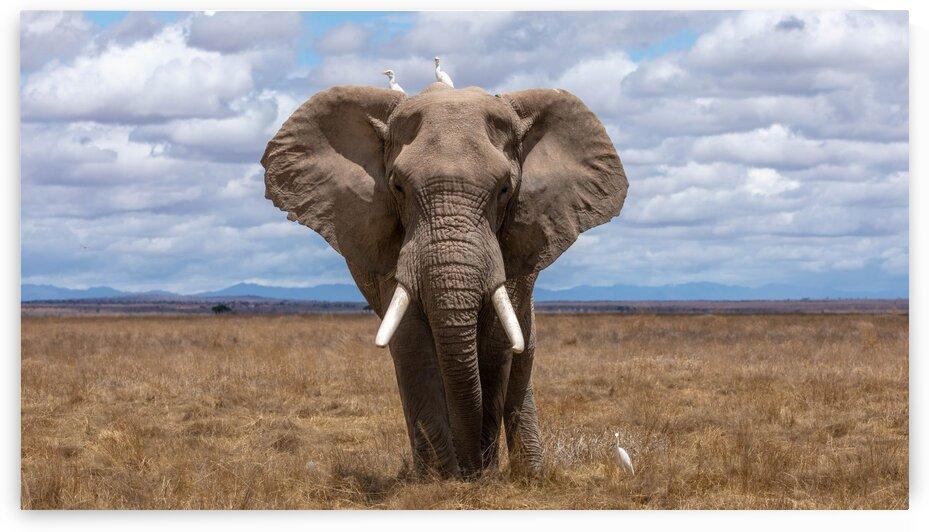 Elephant Matriarch by Lynnette Brink