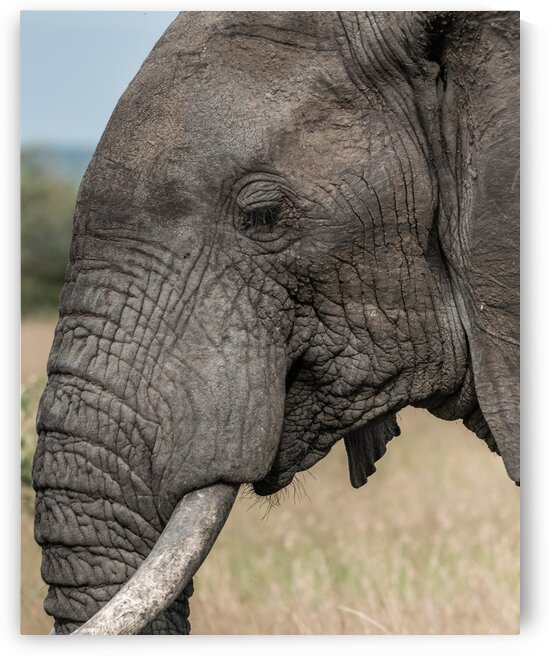Elephant Profile by Lynnette Brink