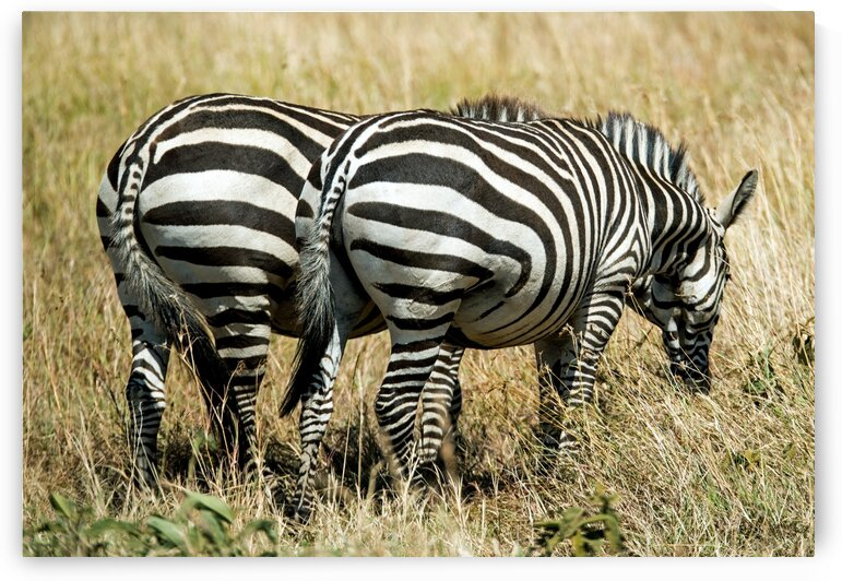 Two Butts by Lynnette Brink