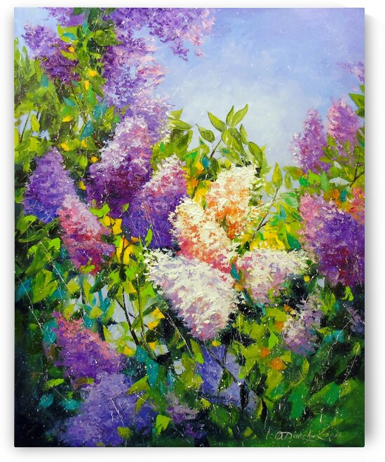 Fragrance of lilac by Olha Darchuk