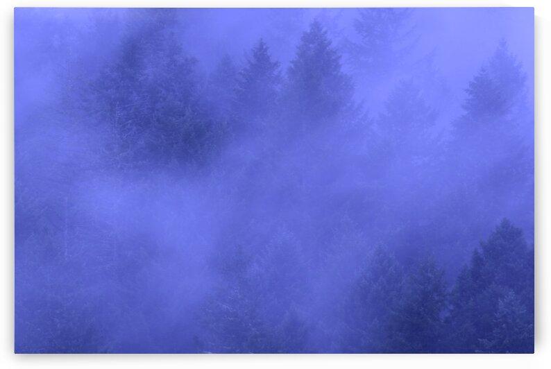 Dramatically Dense Fog Against Large Evergreens by PieLar Inspirations