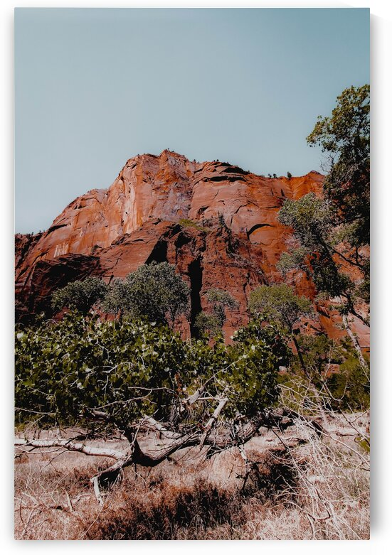 mountain with green tree in the forest at Zion national park Utah USA by TimmyLA