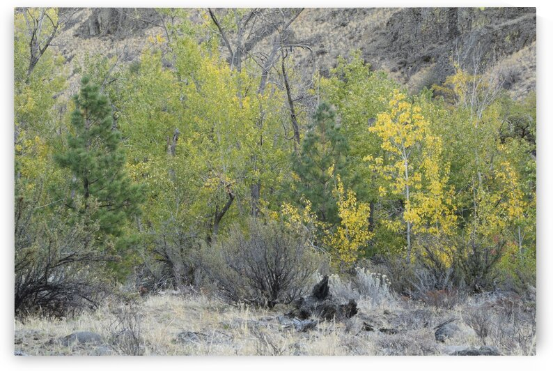 Yellow Foliage Meets Green Foliage In Autumn by PieLar Inspirations