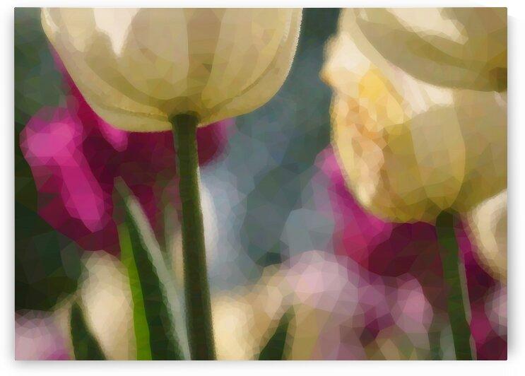 Sous Les Tulipes Jaunes - Under Yellow Tulips  by Carole Ledoux Creations Cl