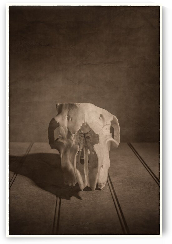 Cranium by Daniel Thibault artiste-photographe