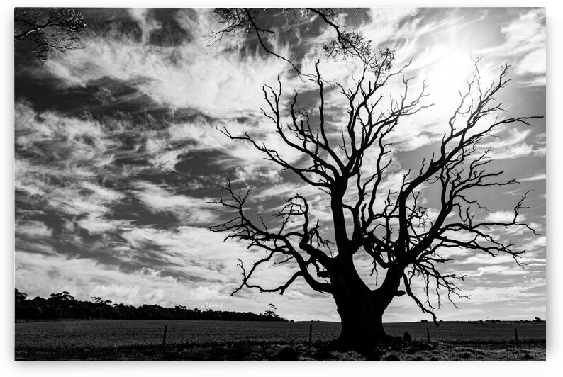 Lone Tree by Contah Photography