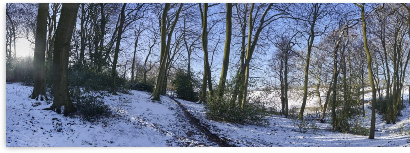 Woods in the Snow by Adrian Brockwell