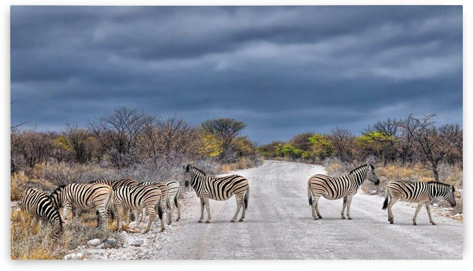 Zebra Landscape by Lynnette Brink