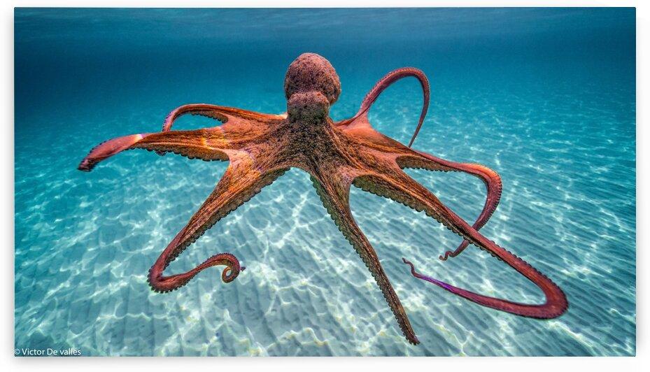 octopus 2 by victordevalles