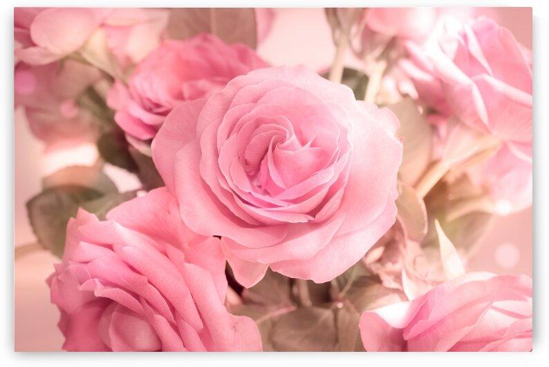 rosa rosenbouquet by Dagmar Marina
