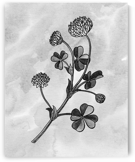 Clover Simple Gray Botanical Flower On Watercolor Marble  by Irina Sztukowski