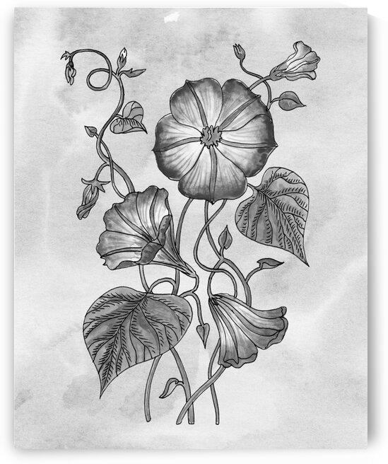 Morning Glory Simple Gray Botanical Flower On Watercolor Marble  by Irina Sztukowski