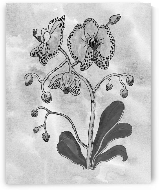 Moth Orchid Simple Gray Botanical Flower On Watercolor Marble  by Irina Sztukowski