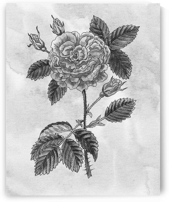 Garden Rose Simple Gray Botanical Flower On Watercolor Marble  by Irina Sztukowski