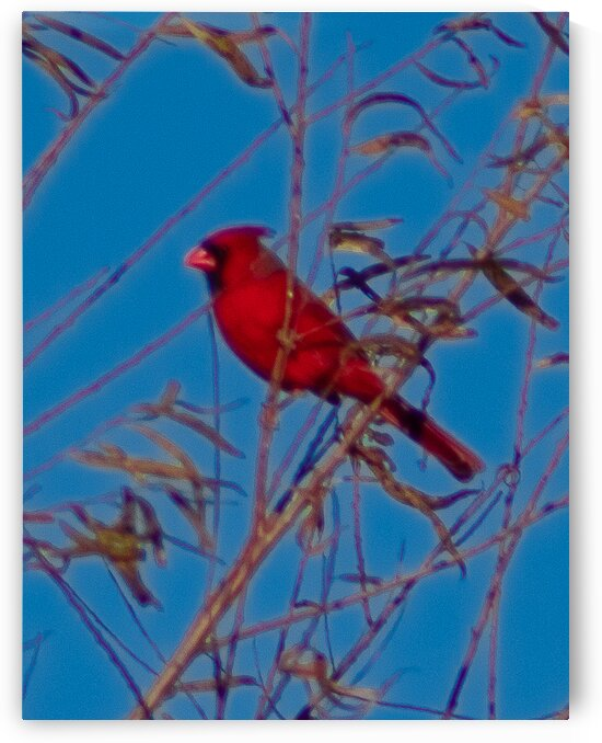 Red Bird by Susan Diann Photography