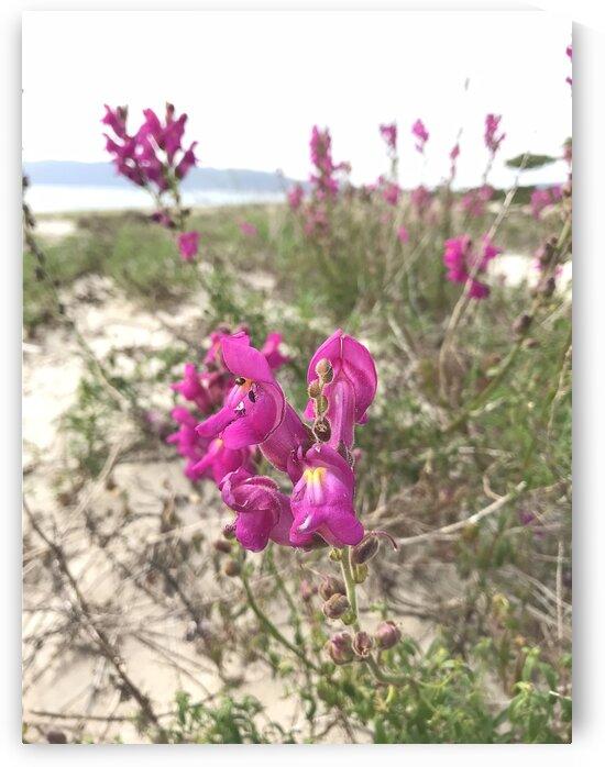 Flowers on the Atlantic ocean coast in Portugal by Anita Varga