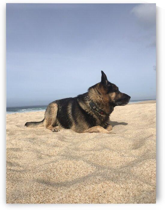 German Sheppard on the sandy beach in Portugal by Anita Varga