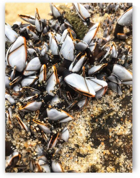 Sea shells in Portugal by Anita Varga