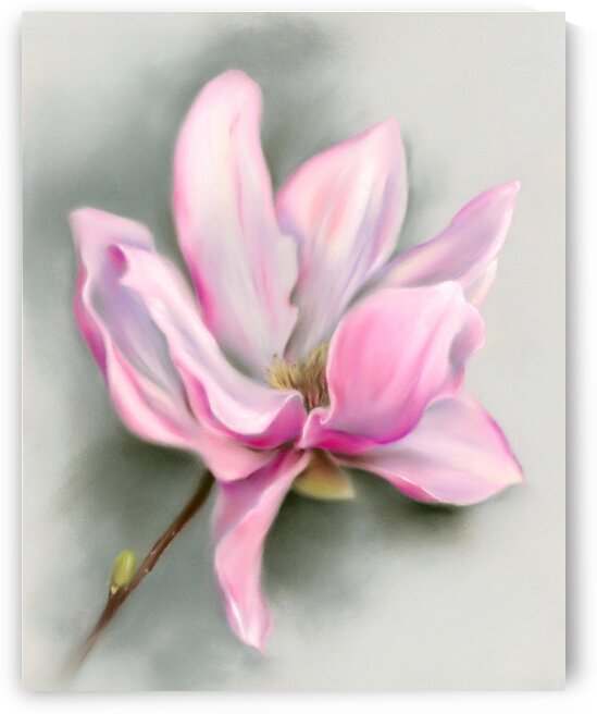 Pink Magnolia Spring Blossom by MM Anderson