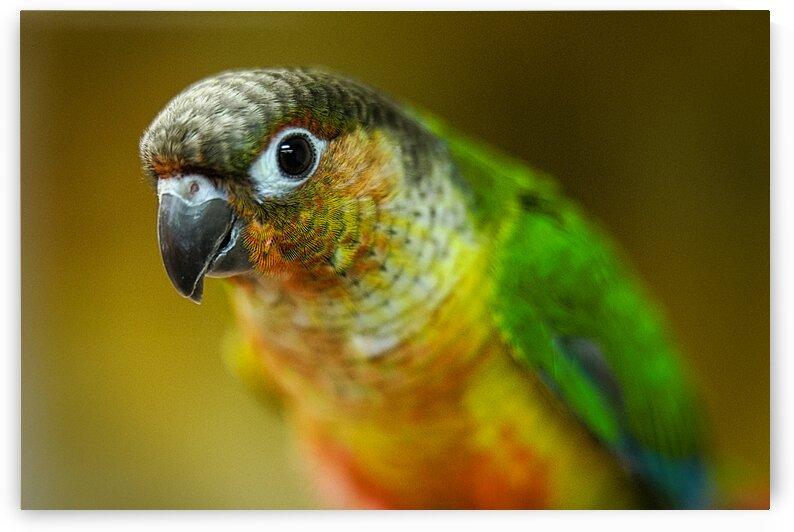 Parakeet by JaydenEricBeaudoin