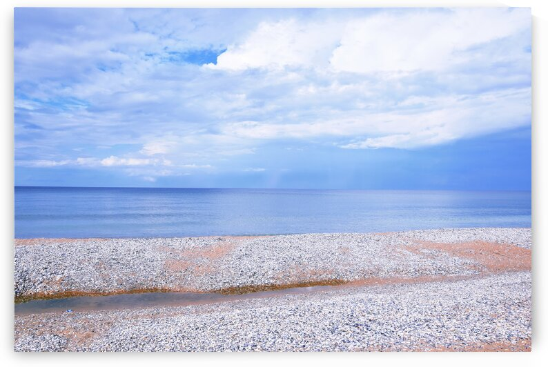 Seascape Beach Covered with Seashells  by Kikkia Jackson