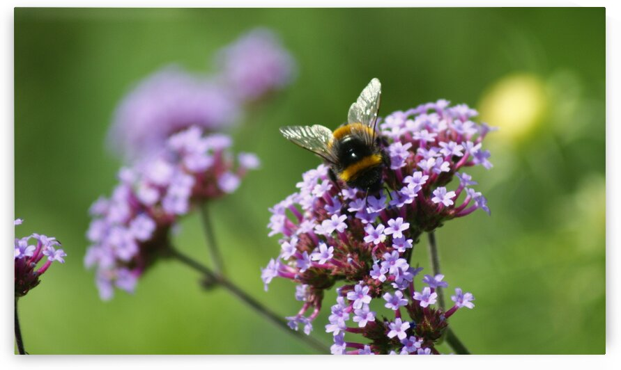 Busy Bee 2 by Pixcellent Adventures