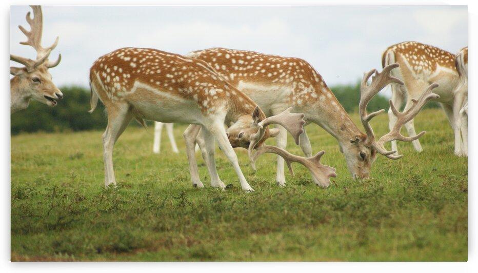 Deer group by Pixcellent Adventures