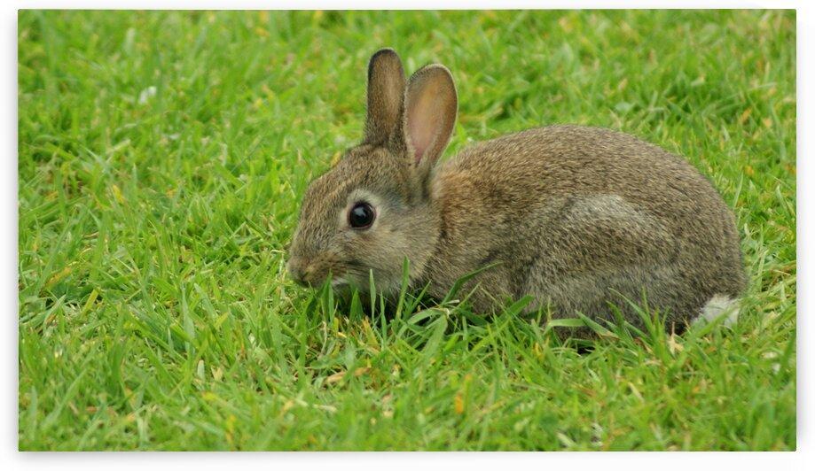 Hiding Bunny by Pixcellent Adventures