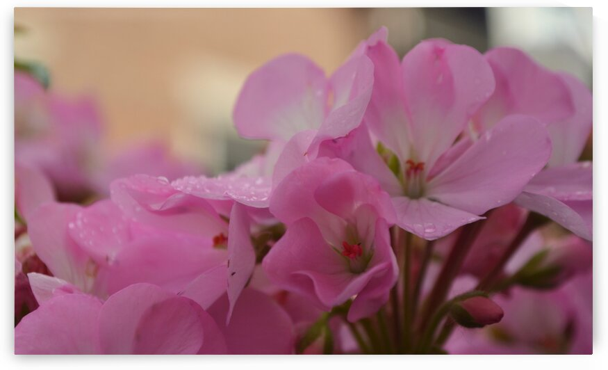 Pretty Pink Raindrops by Pixcellent Adventures