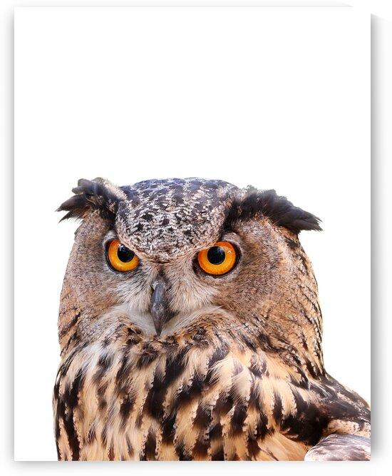 Eagle Owl Color Portrait on White 11x14 by Studio Dalio
