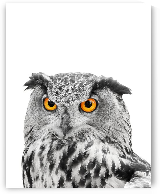 Eagle Owl Black and White Portrait on White 11x14 by Studio Dalio
