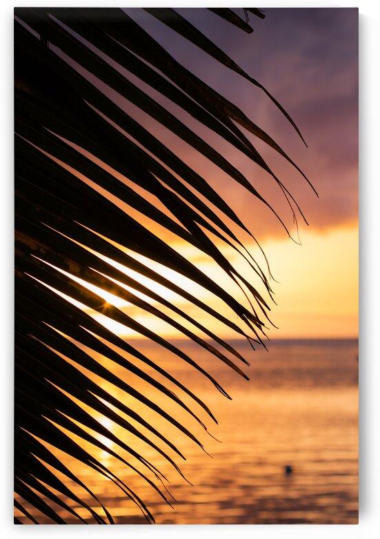 Moorea - palm tree sunset 1 by Samantha Hemery