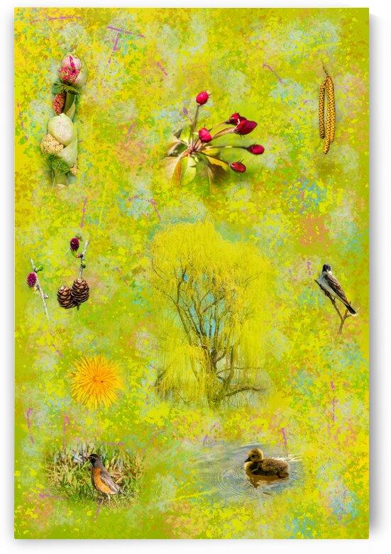 Seasons - Springtime by PitoFotos