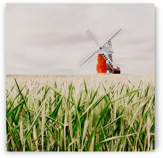 A grain field with green ears on the background of the mill.  by Ievgeniia Bidiuk