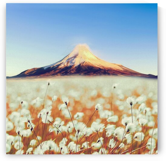 Blooming cotton on the background of the volcano.   by Ievgeniia Bidiuk