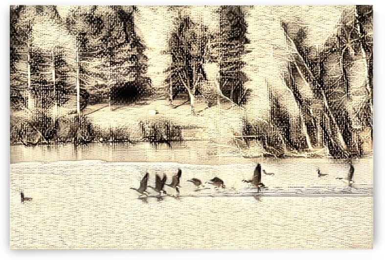 Goose on Lake BW by Flodor